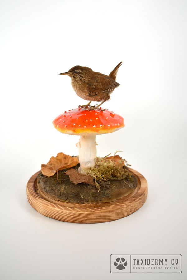 Taxidermy Wren On Mushroom