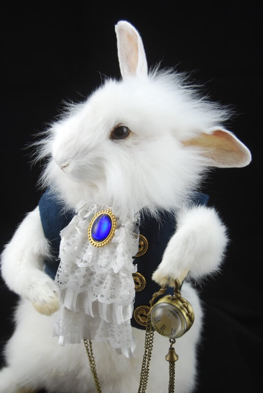 White Wonderland Rabbit Taxidermy