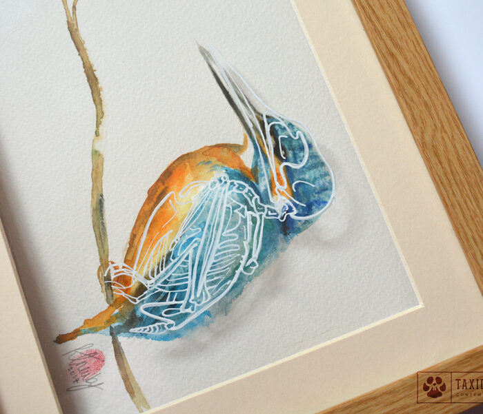 Kingfisher Bird Skeleton