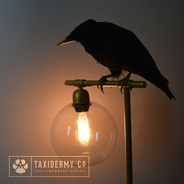 Taxidermy Lamp With Carrion Crow