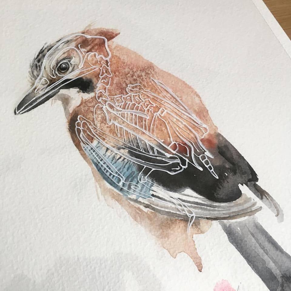 Anatomy of a Jay\' - Original Watercolour Mixed Media Skeleton Art