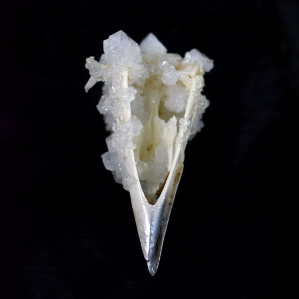 Crystallised Crow Bird Skull
