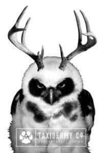 Horned Owl Design