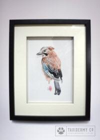 Anatomy of a Jay Original Watercolour Skeleton Art