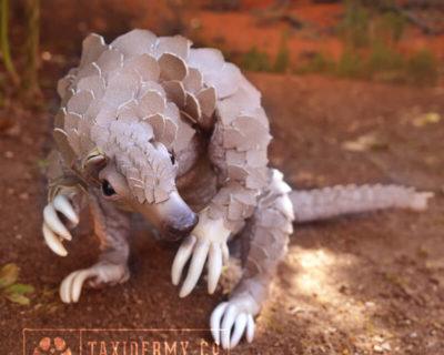 Faux Taxidermy Pangolin Art Doll