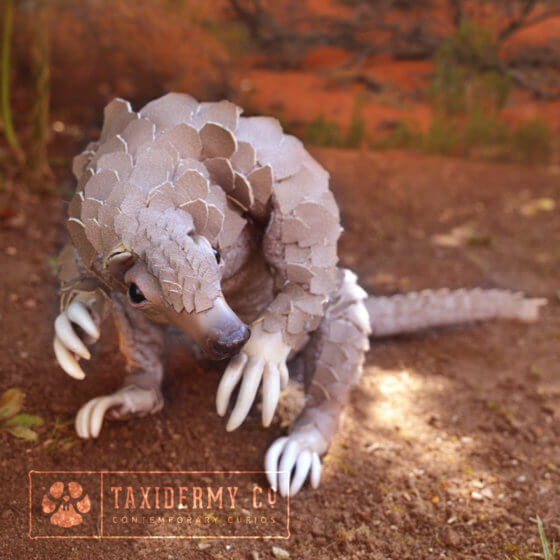 Faux Taxidermy Pangolin Art Doll
