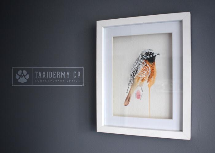 Redstart Bird Anatomy Watercolour Painting
