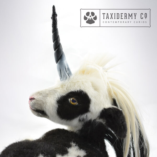 Taxidermy Unicorn Foal