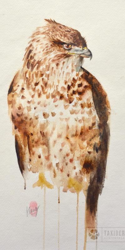 Buzzard Bird Watercolour Painting