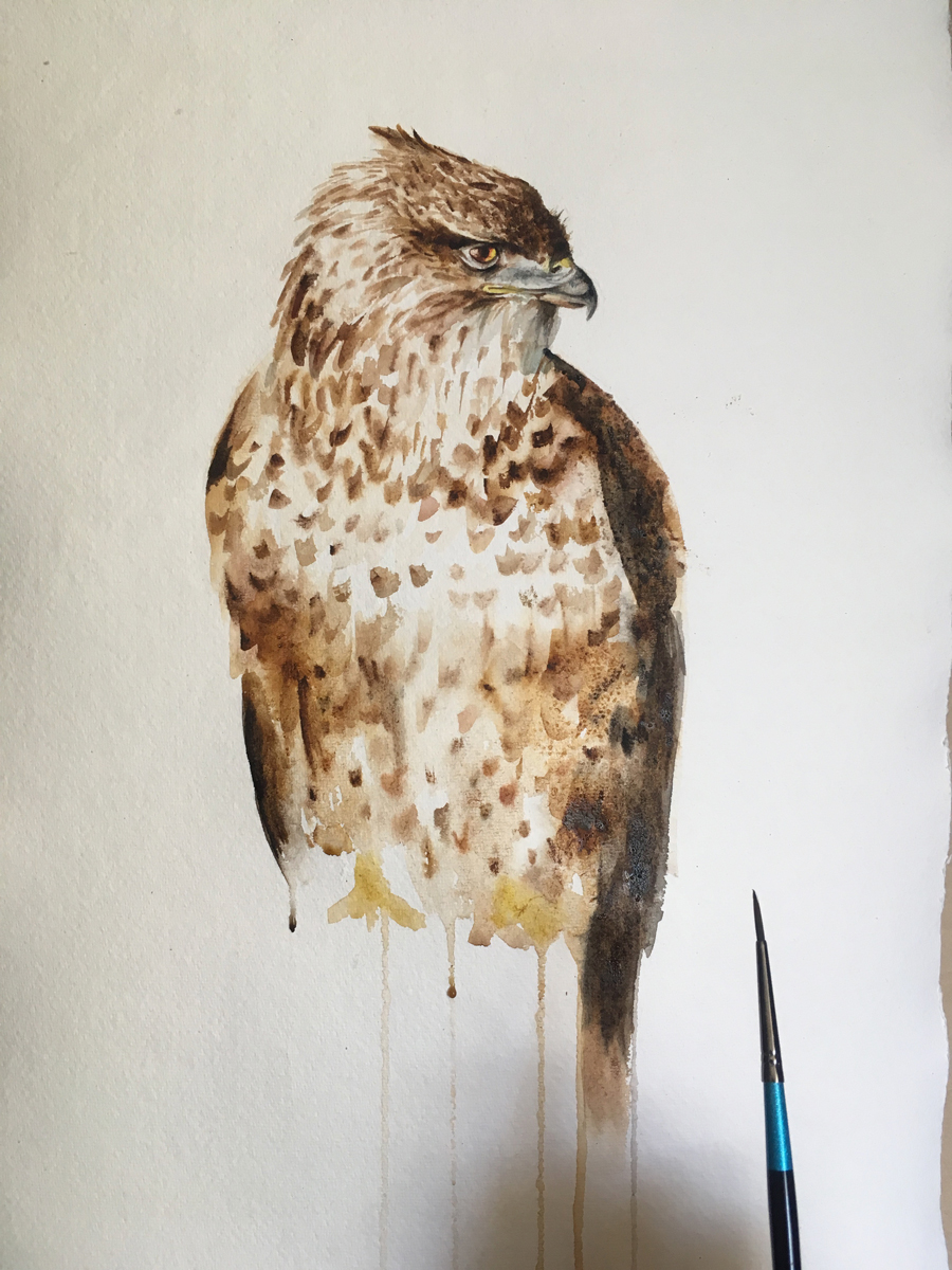 Buzzard Bird Watercolour Painting
