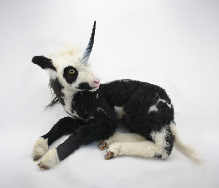Real Taxidermy Unicorn