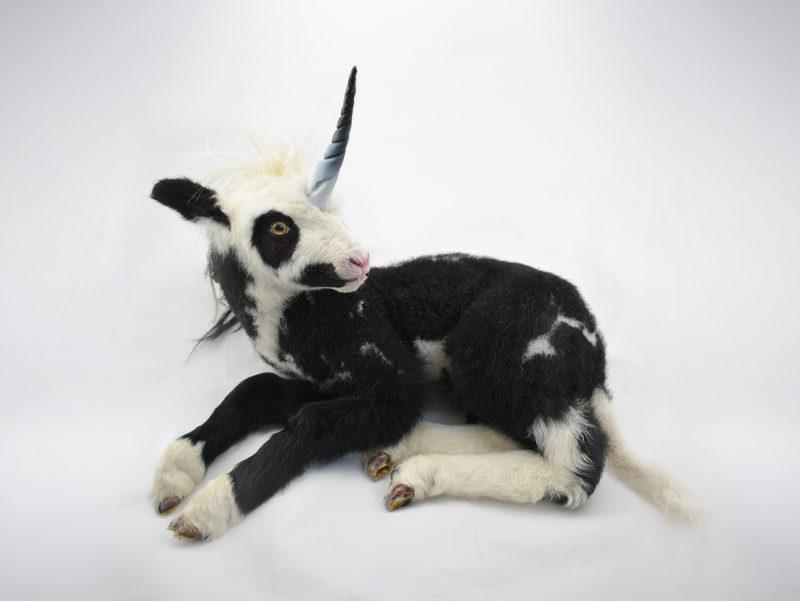 Real Taxidermy Unicorn