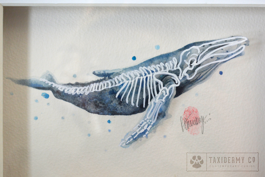 Anatomy of a Whale\' Original Skeleton Watercolour Painting -