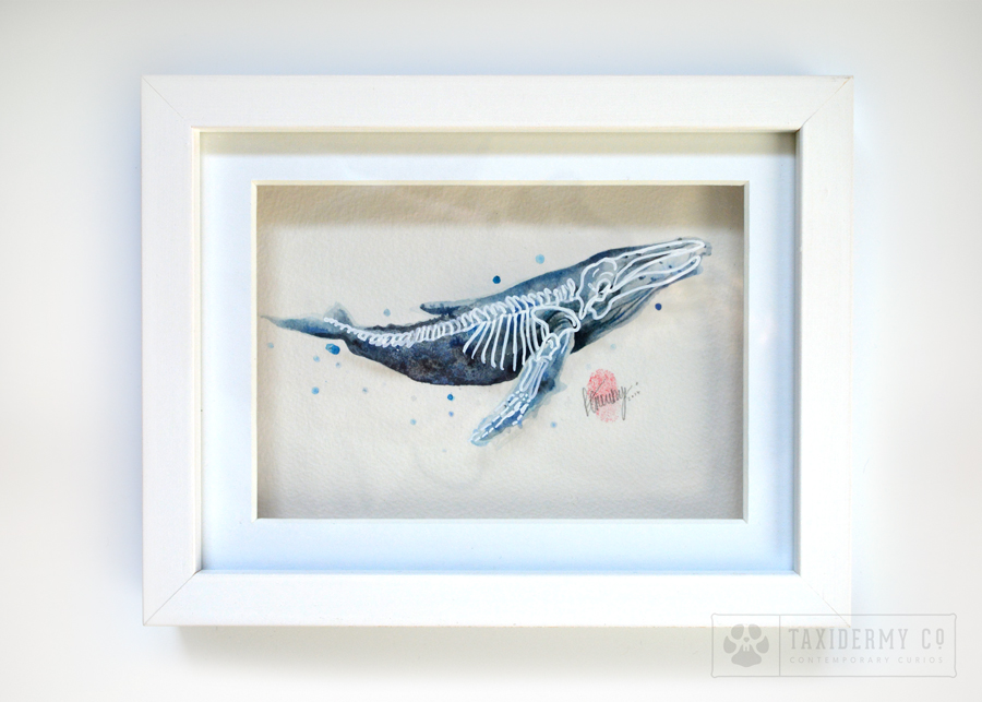 Anatomy Of A Whale Original Skeleton Watercolour Painting