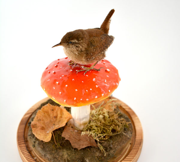 Taxidermy Wren on Toadstool – project complete!