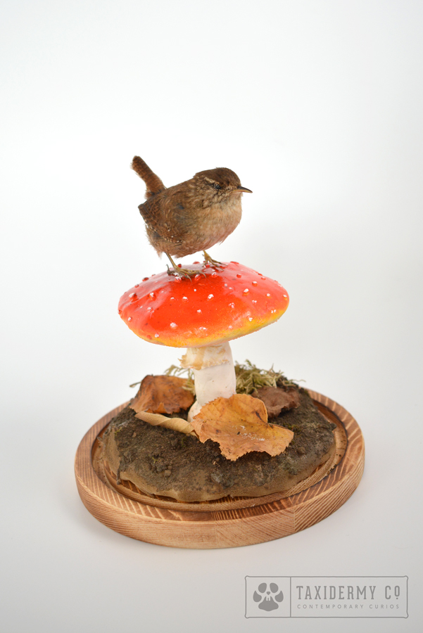 Taxidermy Wren Bird Mushroom