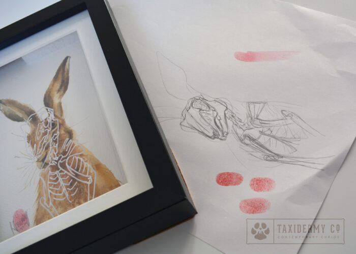 Hare-Skeleton-Wildlife Art