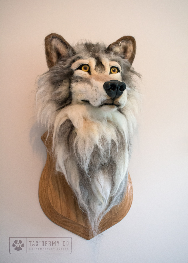 Taxidermy Wolf Head
