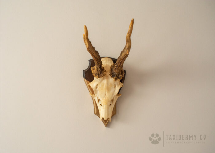 Wall Mounted Deer Antlers