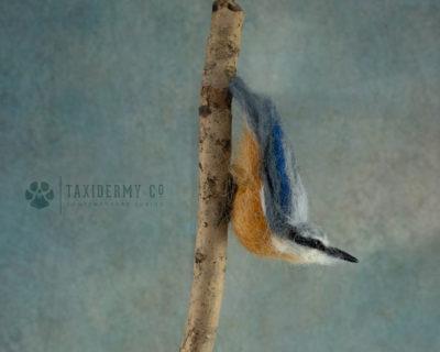 Faux Taxidermy Bird Nuthatch