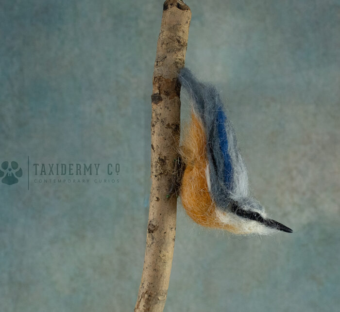Faux Taxidermy Bird Nuthatch
