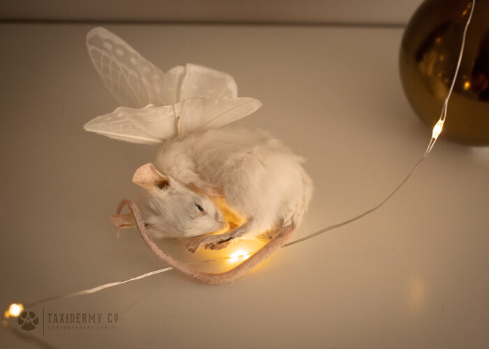 Taxidermy Mouse With Wings