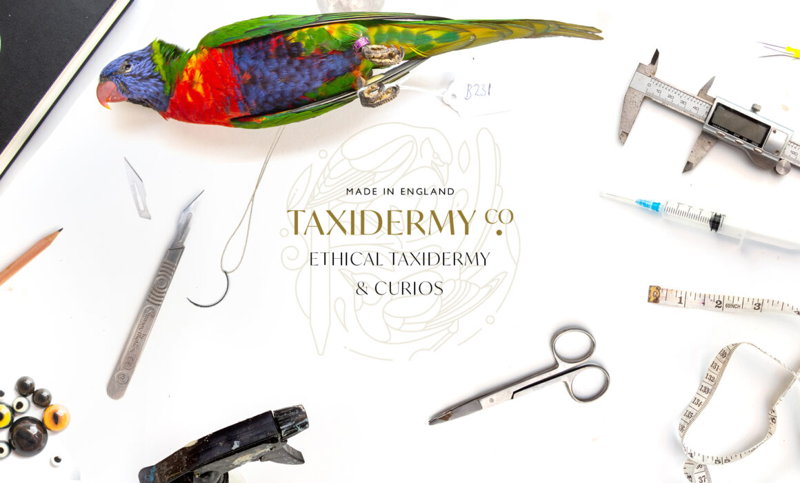 Taxidermy Rainbow Lorikeet surrounded by taxidermy tools